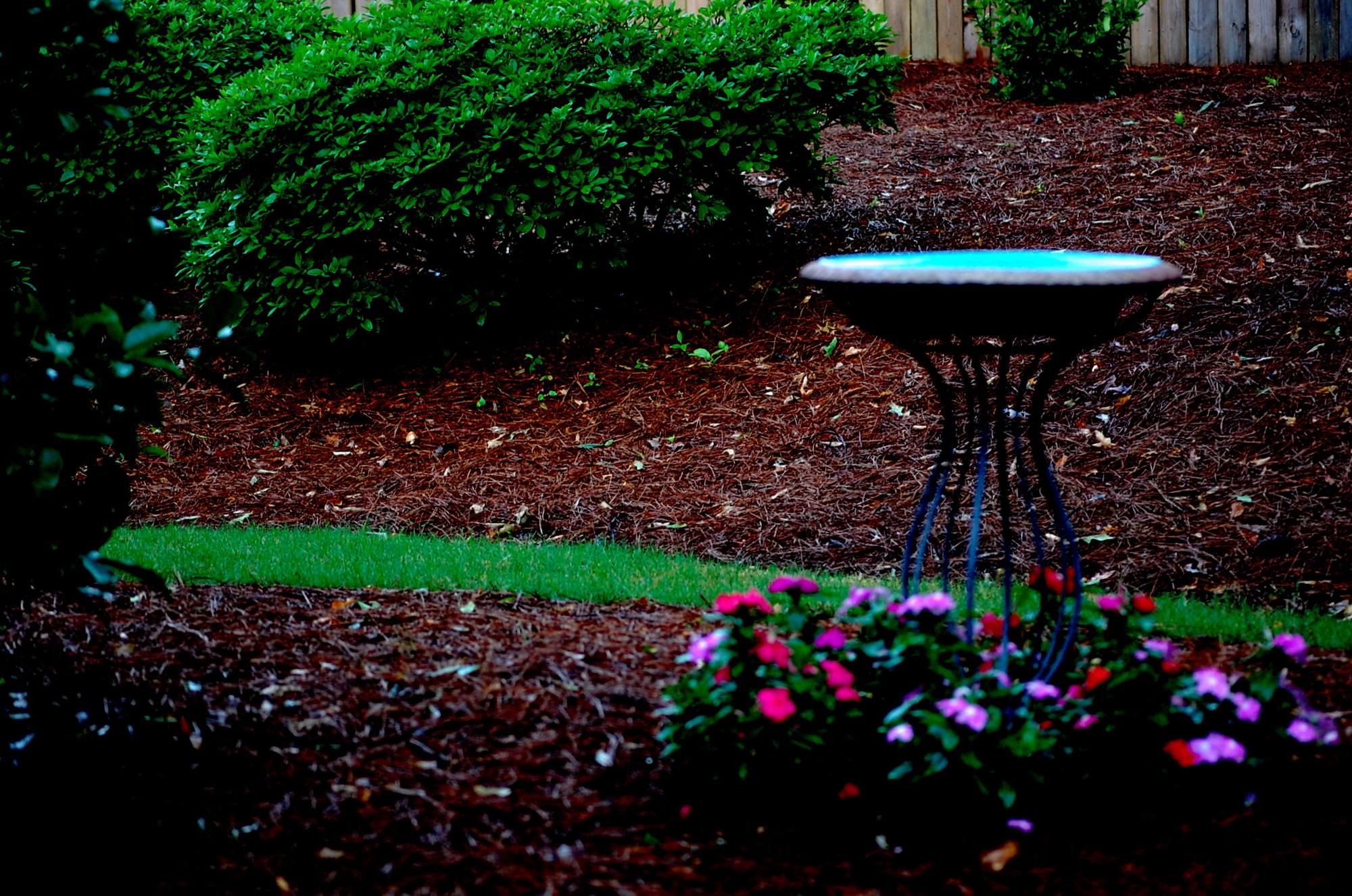 Faking It cover.Rainy garden